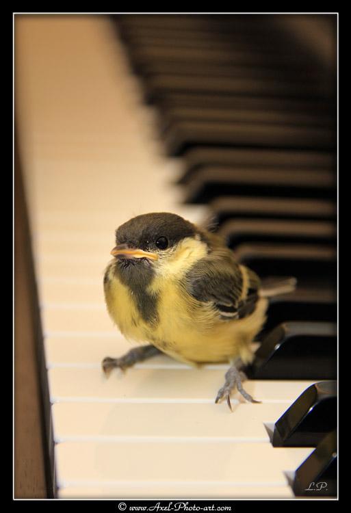 piou-piano