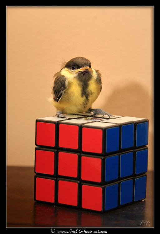 piou-rubiks-cube