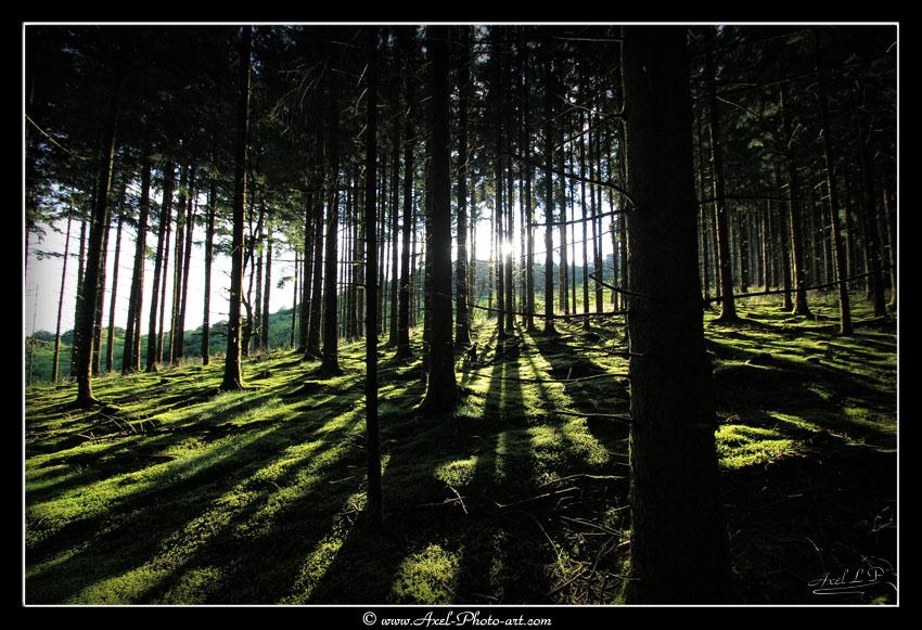 Forêt du Puy de la Monédière