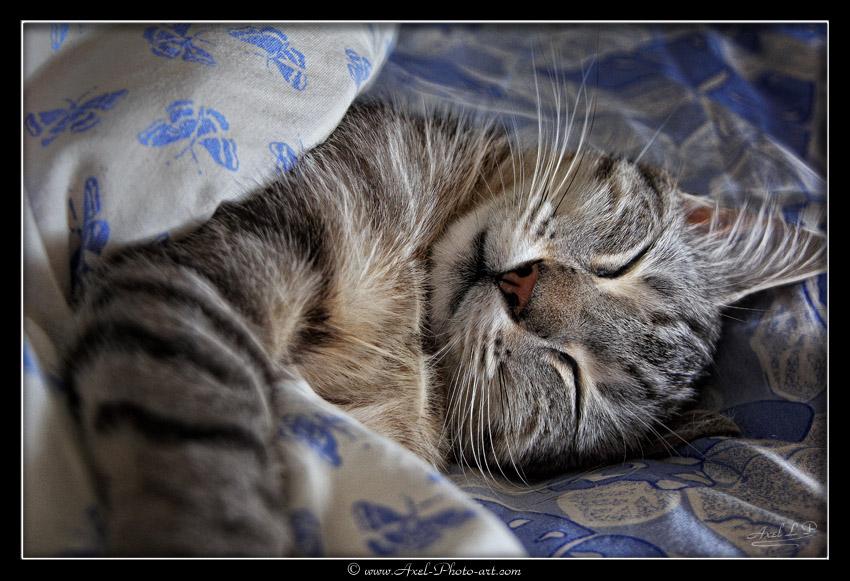 Dur dur la vie de chat…
