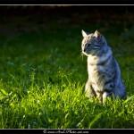 Malice dans l'herbe