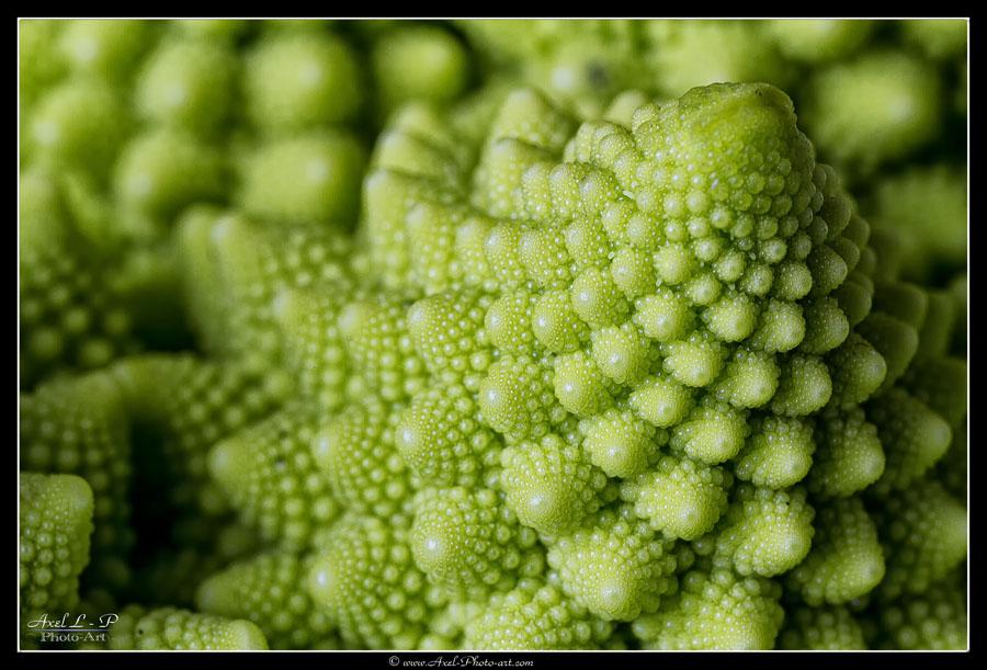 Fractales naturelles : Chou Romanesco