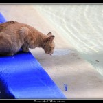 Les chats de Marrakech