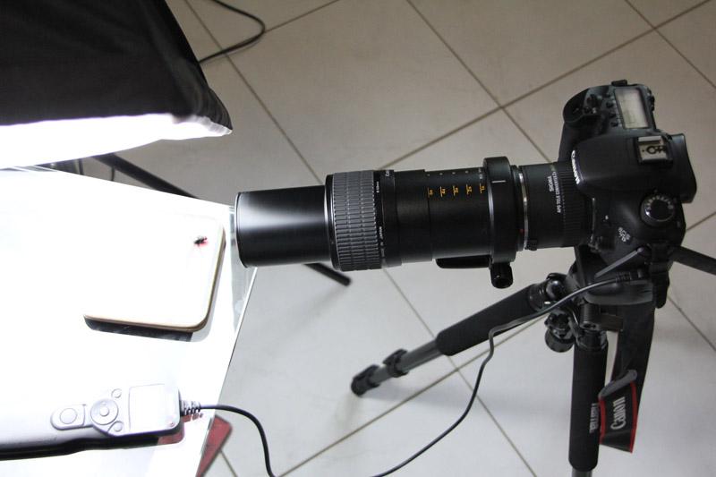 macro photographie mouche - Axel LP - photographe limoges
