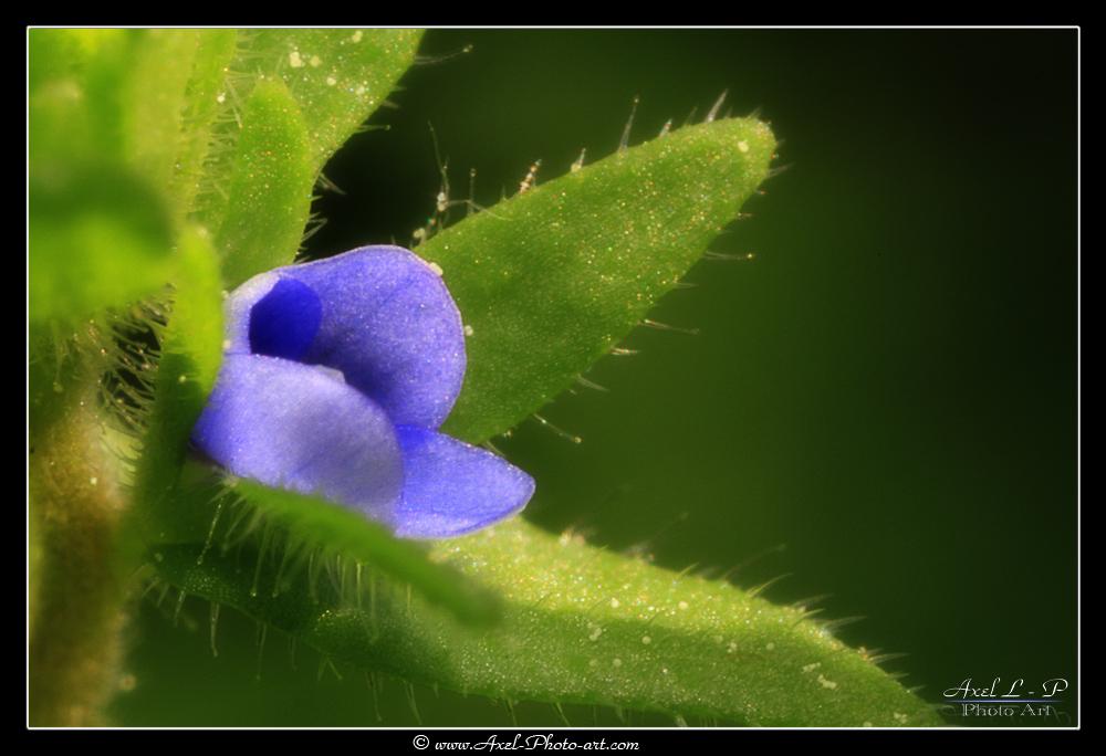 Petite fleur (1mm)