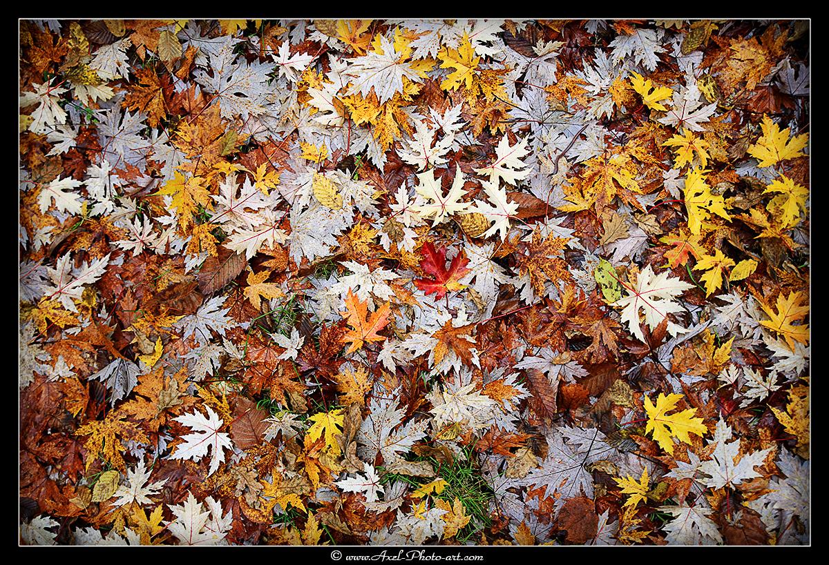 Nuances d'automne