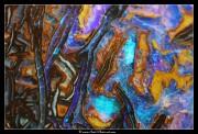 Opale koroit (australie)