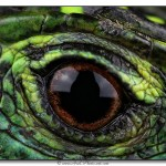 Oeil lezard - Tirage 45x30 - Encadrement 60x40