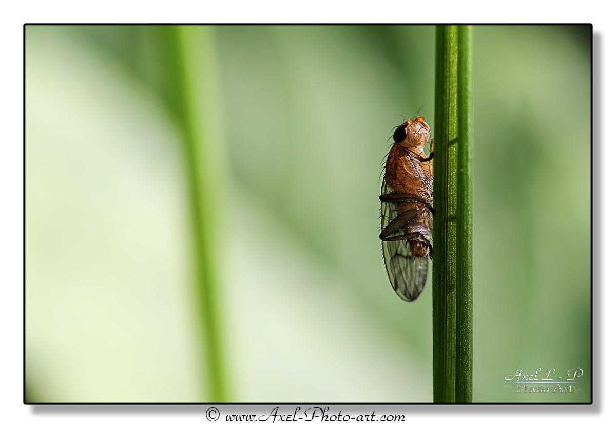 Petite mouche