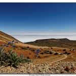 Fleur Tenerife - Tirage 45x30 - Cadre 60x40