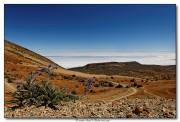 Fleur au pied du El Teide - Iles Canaries