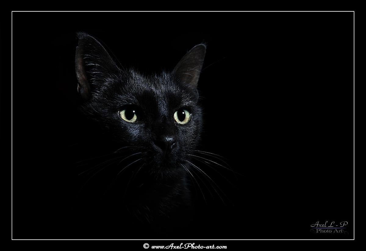 Chat noir : Anubis