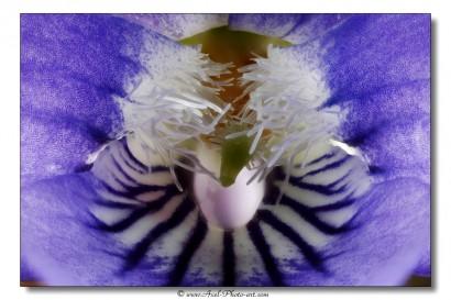 Pistil et androcée d'une violette - Focus stacking de 22 images Canon 5D MIII | MPE-65 | F/9 | 4s | ISO 50