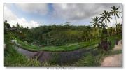Rizières en terrasse - Bali - Indonésie
