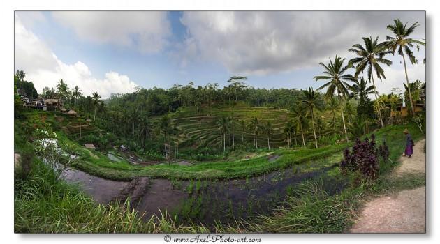 Rizières en terrasse - Bali