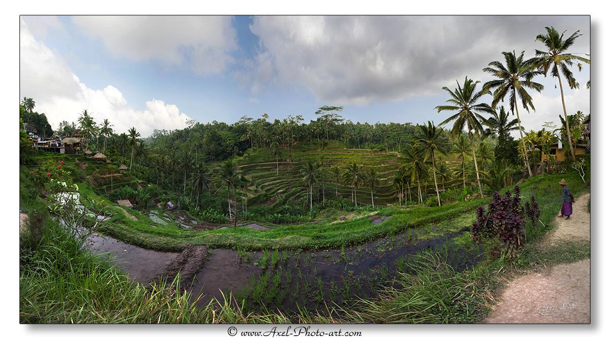 Rizières en terrasse – Bali – Indonésie