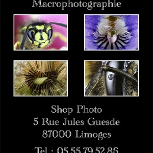 Expo : Macrophotographie > Novembre 2015 > Shop Photo Limoges
