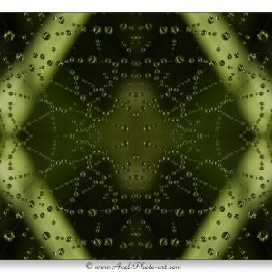 Gouttes d'eau sur toile d'araignée