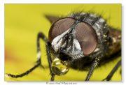 Une mouche qui bulle