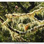 Plaine des tamarins – Ile de la Réunion