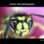 """Livre """"Univers Macrophotographie"""""""