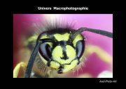 Livre Univers Macrophotographie