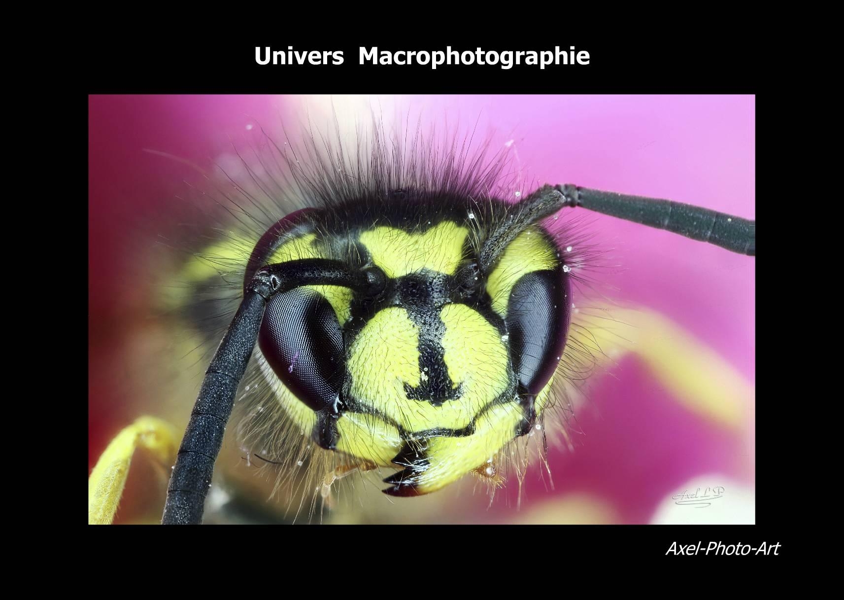 Livre «Univers Macrophotographie»