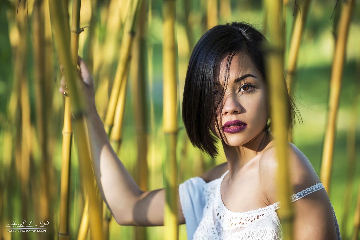 Maylie – Bambous